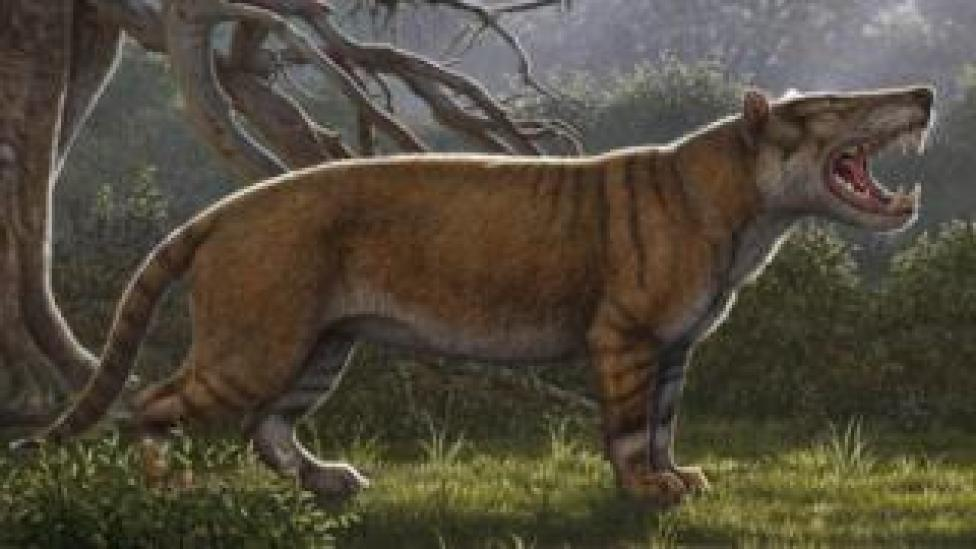 Artist's impression of fossil find
