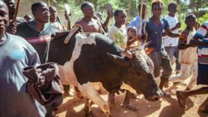 People walk with victorious bull Misango in western Kenya