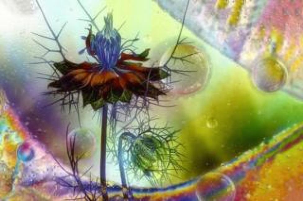 A colourful montage of a flower with bubbles