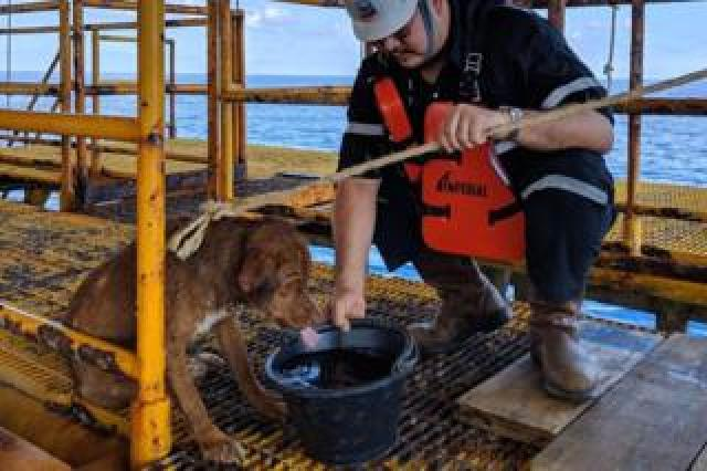 The dog was given fresh drinking water on the rig