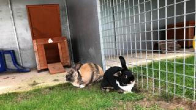 rabbits in the hutch