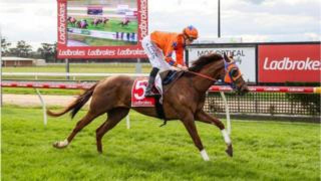 Golden Gee ridden by Ben Allen wins the Ladbrokes Cash In BM58 Handicap at Moe Racecourse on September 24, 2019 in Moe, Australia