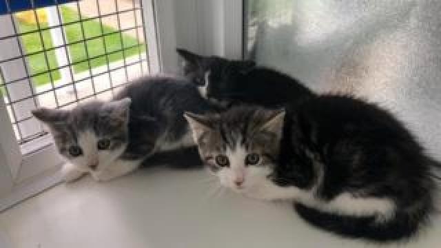 Kittens in the cattery