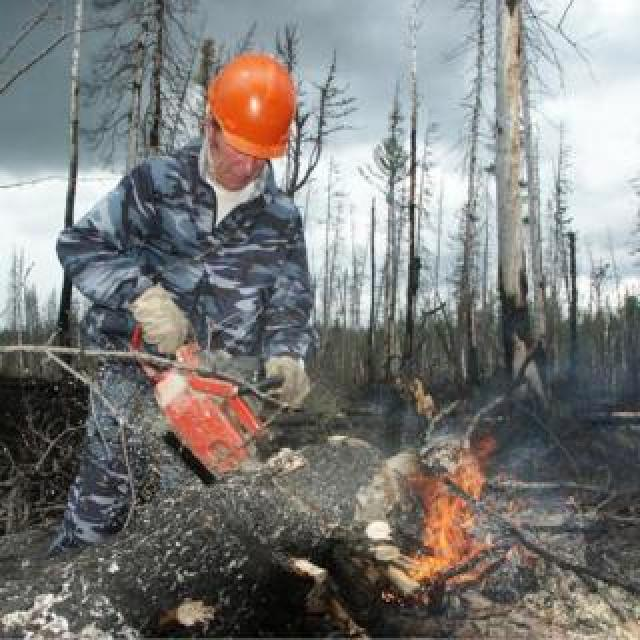 An emergencies ministry serviceman cuts a tree to localise a wildfire in Krasnoyarsk region, Russia. Photo: 1 August 2019