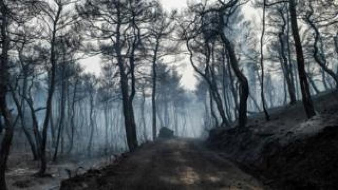 La fumée monte d'une route noircie menant à travers une forêt ravagée par un incendie