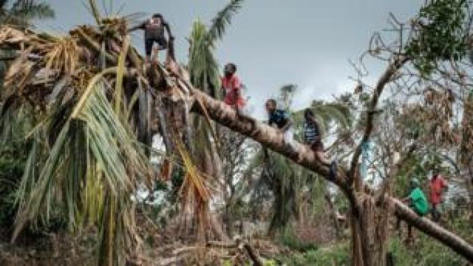 Children climb on a coconut tree damaged by the winds of cyclone Idai in Beira, Mozambique, on March 27, 2019.