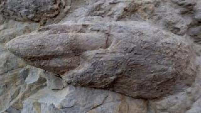 Dinosaur footprints near Hastings