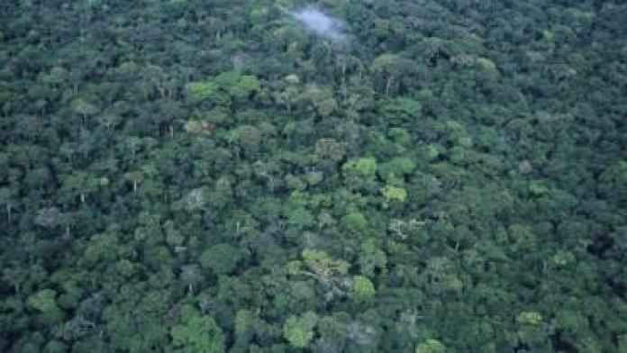 A rainforest canopy in the Democratic Republic of Congo, seen from the air
