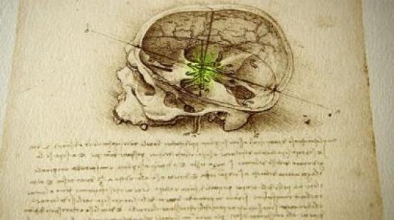 Cráneo dibujado por Leonardo da Vinci