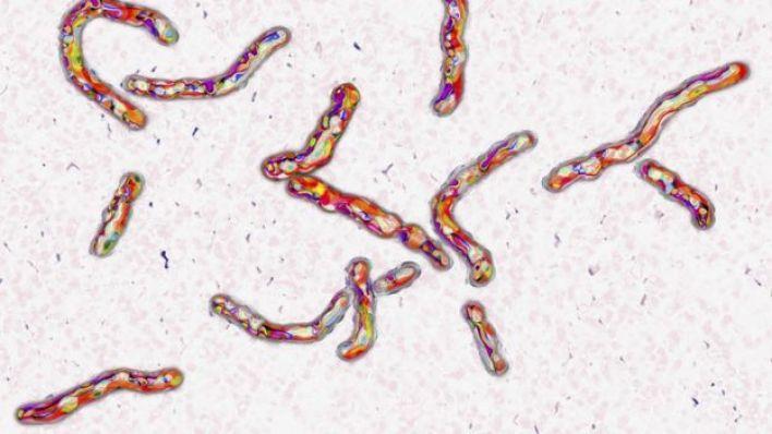 Tüberküloz bakterisi