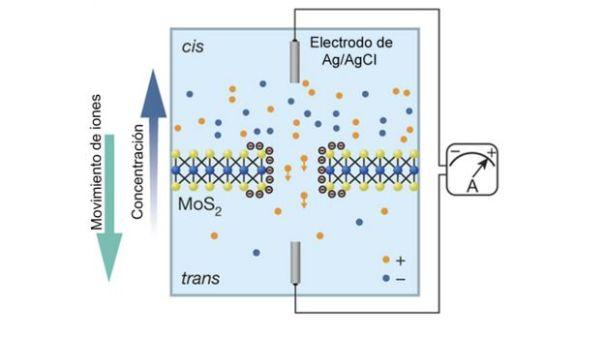 Gráfica explicando el proceso de osmosis a través de una membrana de tres átomos de espesor.