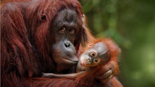 Um macaco com seu filhote