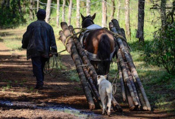 Un hombre lleva leña con su caballo y su perro
