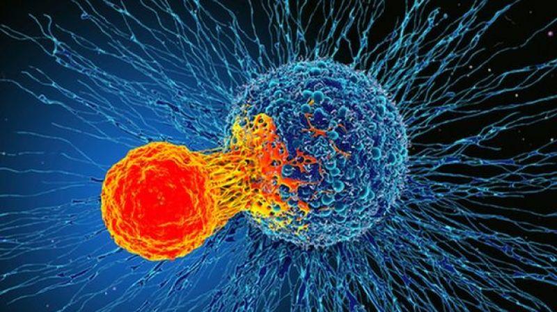 حمله سلول های تی به سلول های سرطانی