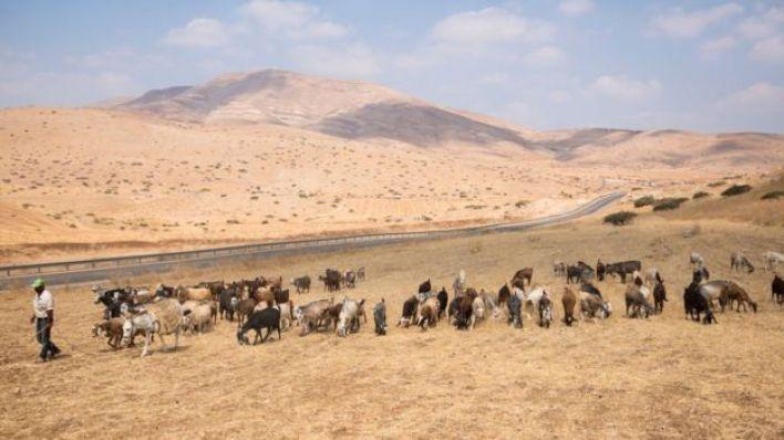 منطقة غور الأردن