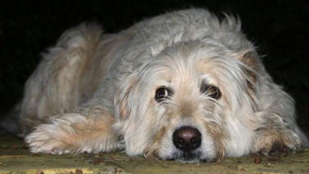 لاحظ الناس أن كلابهم الأليفة تصاب بالملل، الذي قد يدفعها لسلوكيات عنيفة