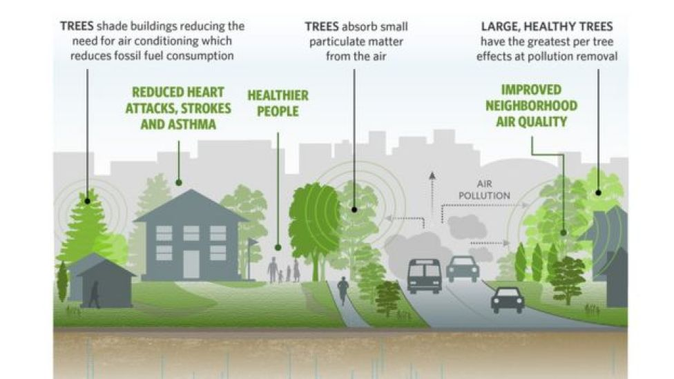 How trees cut cities' air pollution