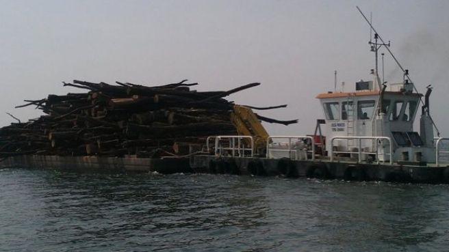 Le bois du lac est chargé sur une barge avant d'être transporté à une scierie.