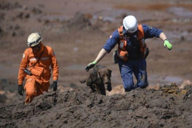 Cão farejador da equipe de bombeiros de Santa Catarinabusca por vítimas no córrego do Feijão