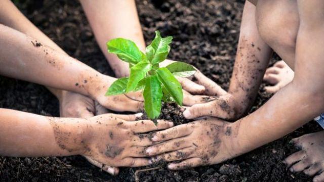 Crianças com as mãos sujas, plantando uma planta