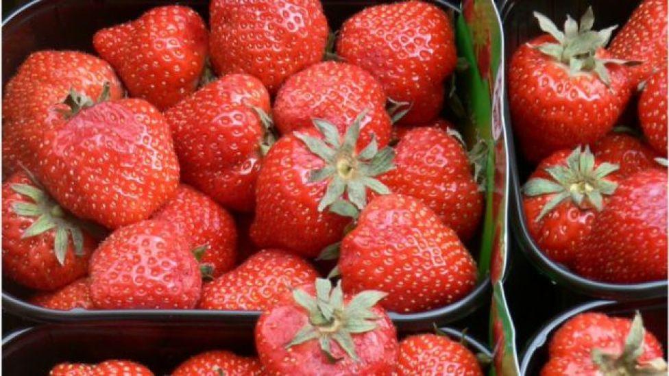 ثمار فراولة