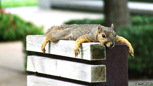 Squirrel having a rest