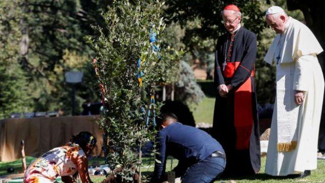 Papa acompanha plantio de árvore