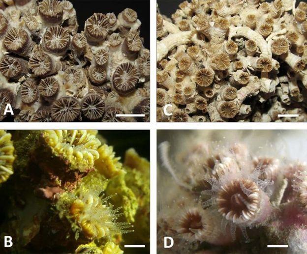 Кораллы