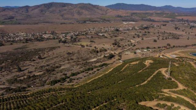 Vista aérea de uma plantação de abacates em La Ligua, região de Valparaíso.
