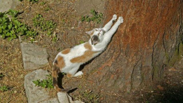 Gato arranhando tronco de árvore