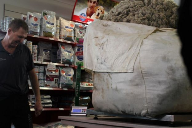 Weighing the world's biggest wool haul