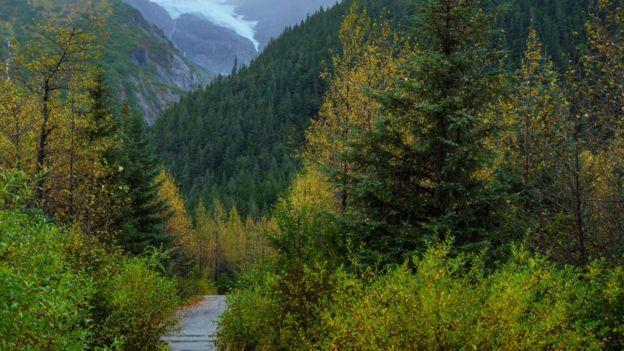 Árvores e montanhas em paisagem no Alasca
