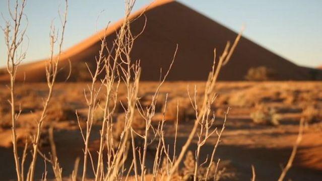 Vegetação seca no deserto