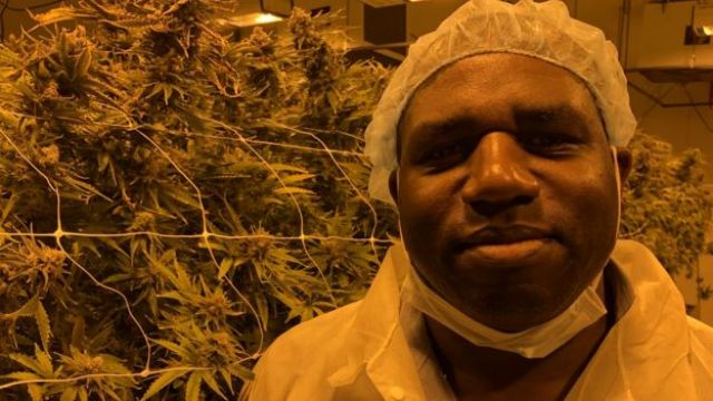 David Lammy next to cannabis plants