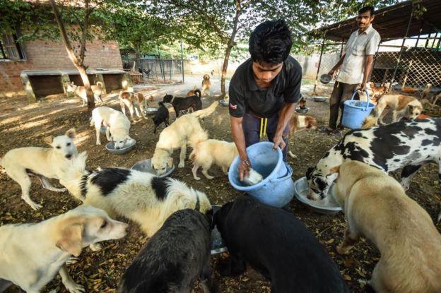 Alimentación de los perros