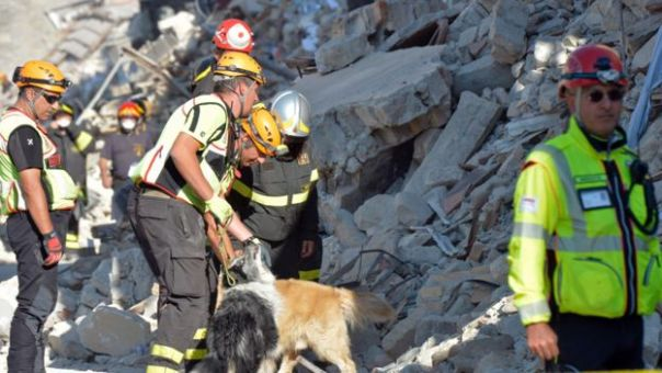 Tareas de rescate con bomberos y un perro en Amatrice