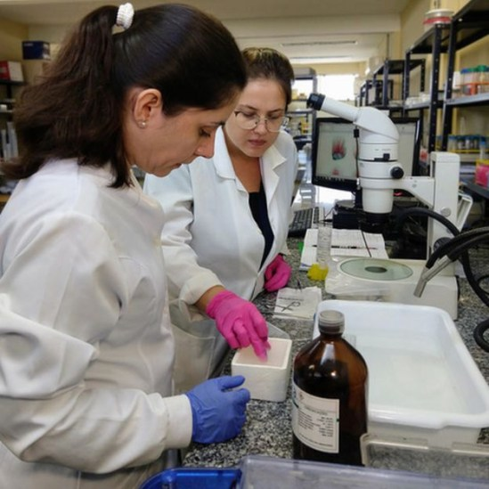 107892031 fotosled 6 - Cientistas brasileiros estudam se humanos podem regenerar membros como salamandras