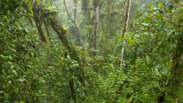 Bosque en Ecuador