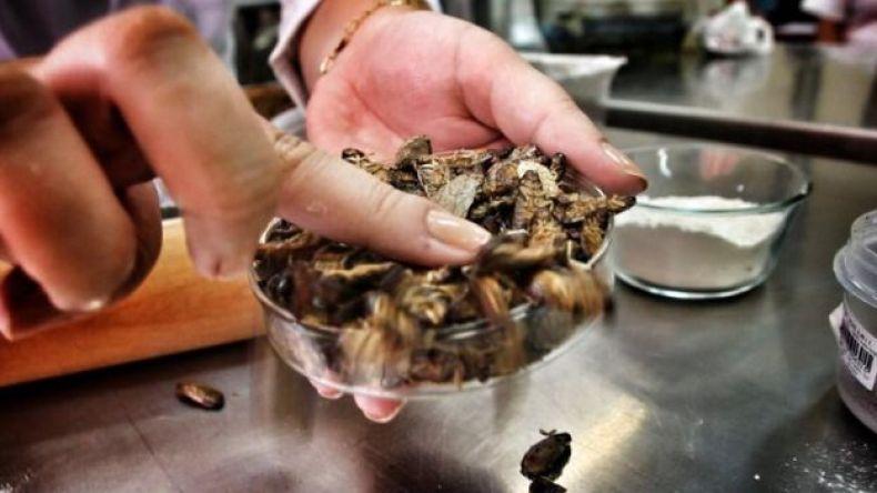 Cucarachas langostas deshidratadas.