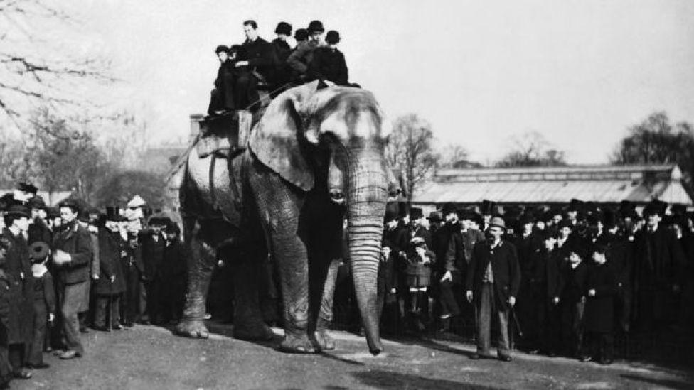 Jumbo con unos ocho visitantes sobre su lomo en el Zoológico de Londres Foto: Wiki Commons
