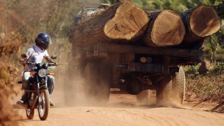 Arboles cortados por madereros ilegales.