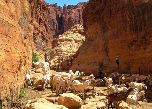 Canyon with goatherder and goats