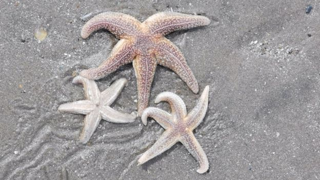 thousands of starfish washed