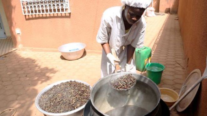 Caterpillars are boiled to prepare them for sale