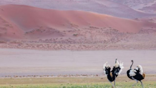 Avestruz no deserto