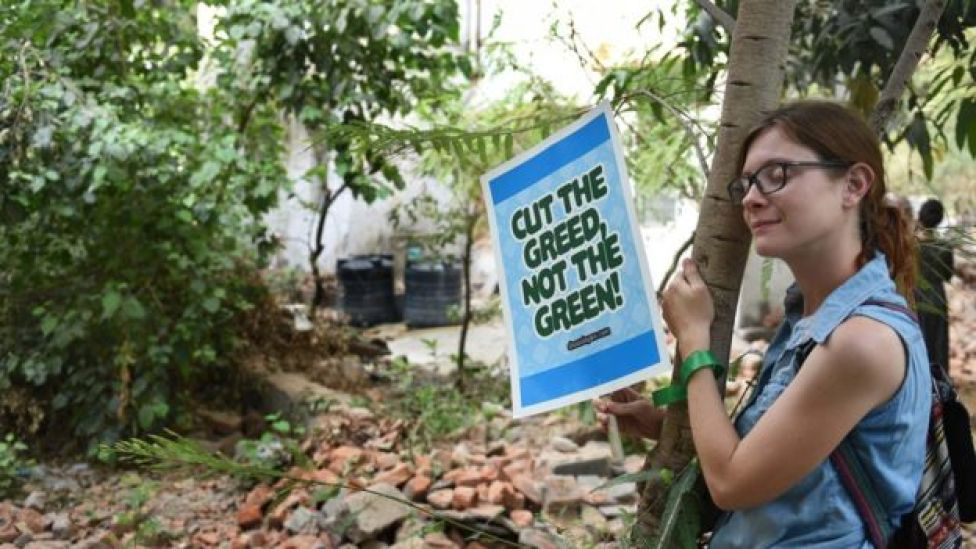A woman hugs a tree as she holds a placard reading, 'Cut the Greed, Not the Green'