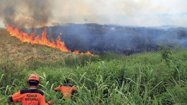 Firemen work to contain burning wildfires in South Sumatra, Indonesia on Saturday, 5 September, 2015