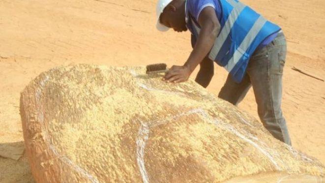 La qualité d'une grosse bûche est contrôlée après son extraction du lac Volta.