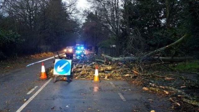 Drzewo na drodze w Surrey