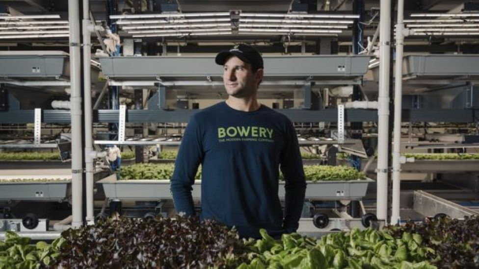 Irving Fain, Bowery Farming